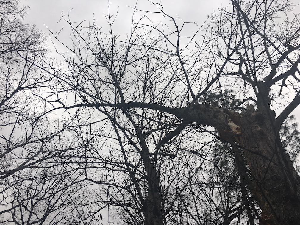 Trees in Arlington, VA